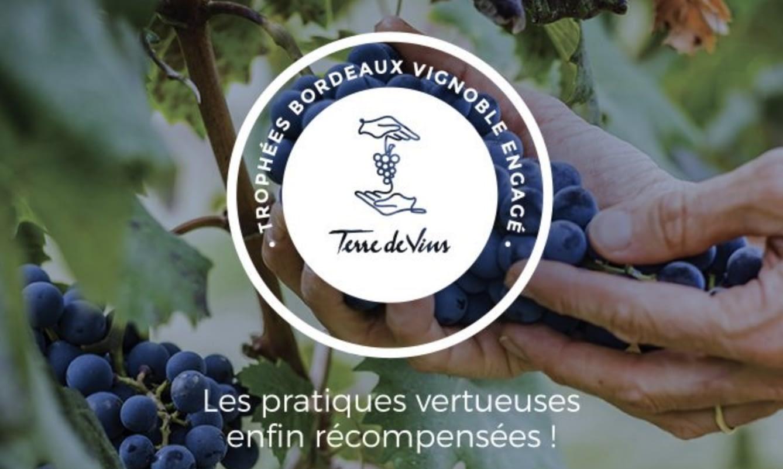Castel Wine International wint 'Vignoble Engagé' award